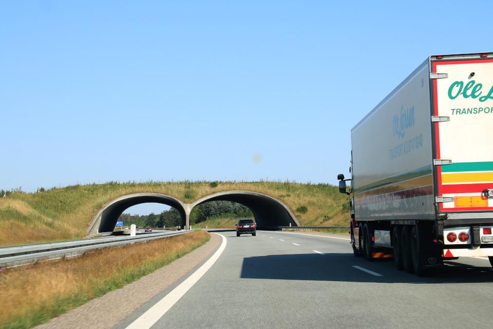 Экодук в центральной части полуострова Ютландия, по дороге в Леголенд