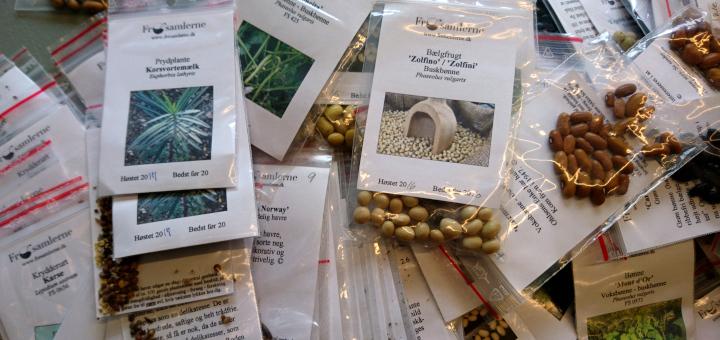 Общество коллекционеров семян Дании семена старых сортов 3feb18 Risskov bib www.florapassionis.com