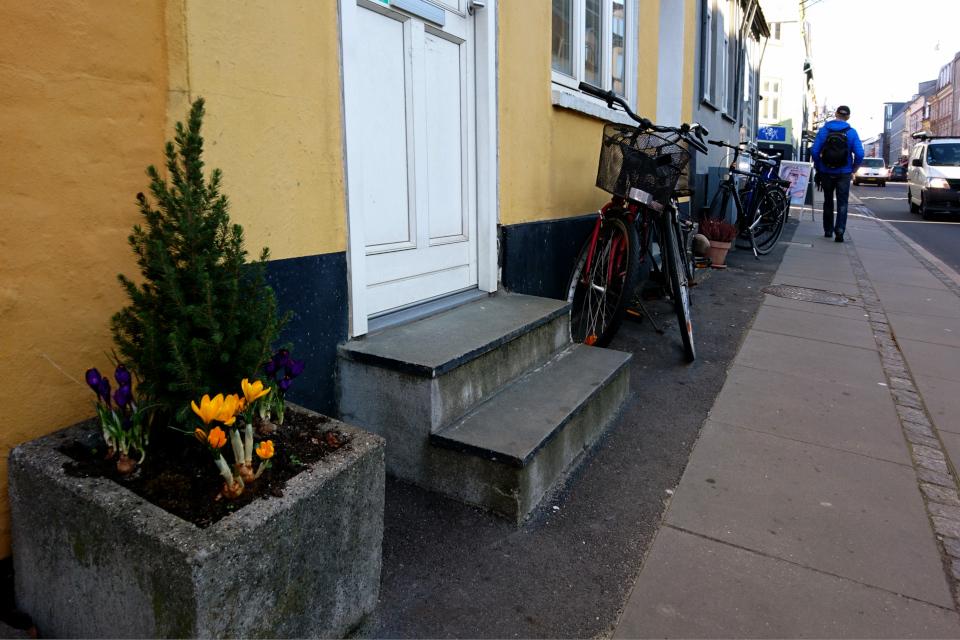 Крокусы в Орхусе, в старой части города с жилищными комплексами