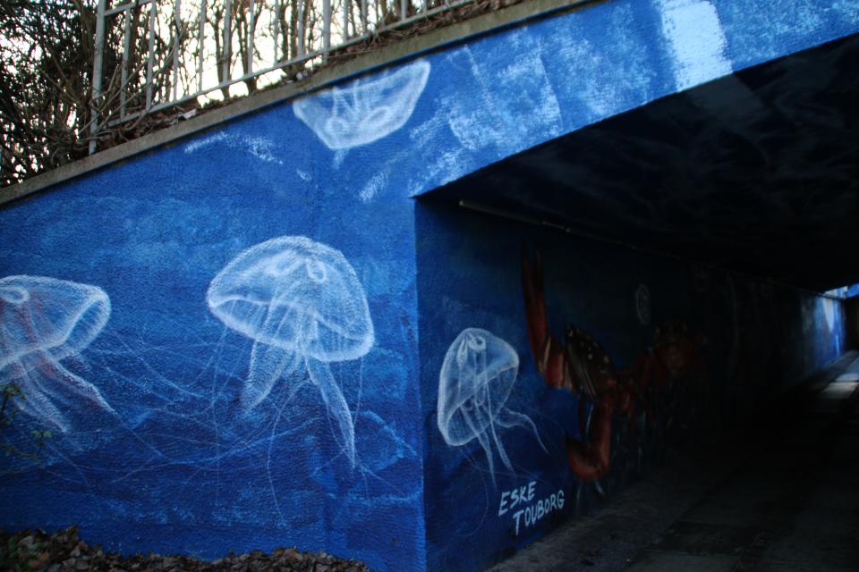 Ушастые медузы (лат. Aurelia aurita)