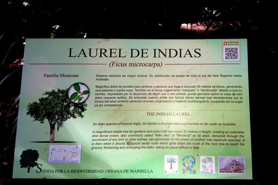 Табличка с описанием фикуса микрокарпа в городском парке