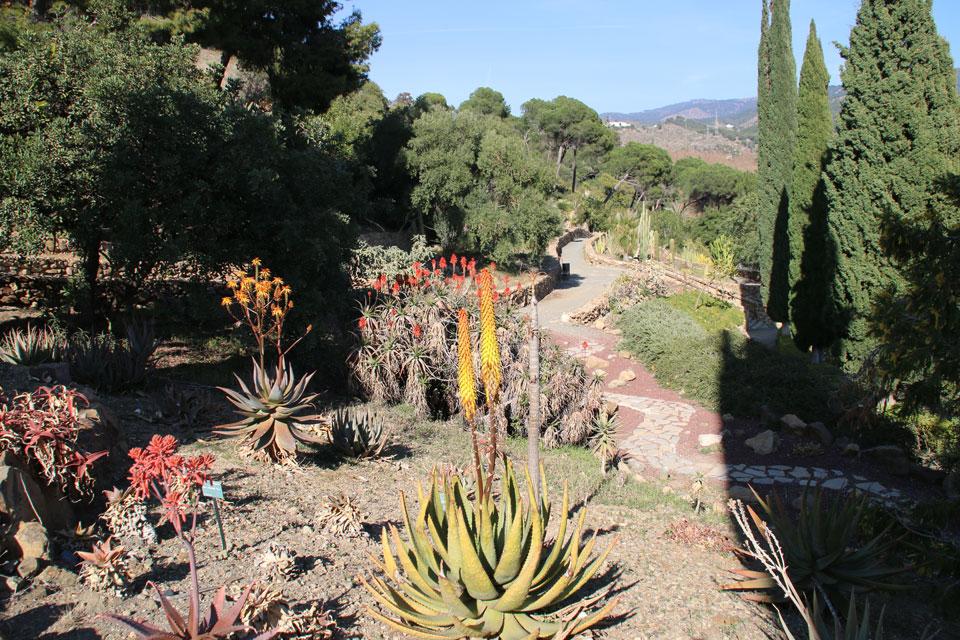 цветущие алоэ ботанический сад Ла Консепсьон Малага