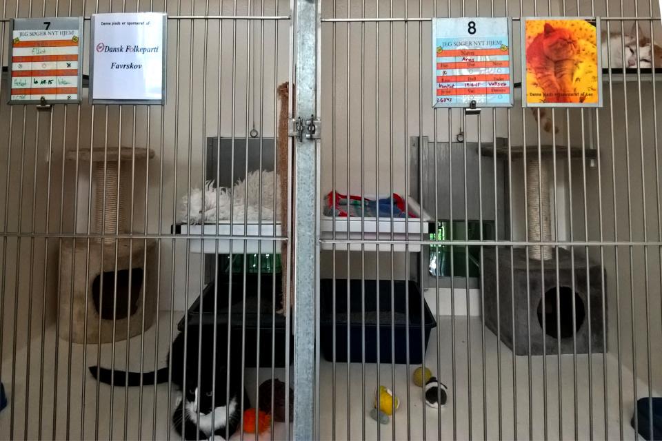Приют для кошек в Дании