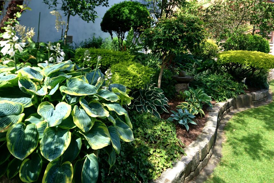 Клумба с хостами и сформированными растениями в палисаднике дома