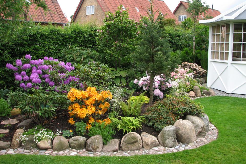 Цветущие рододендроны в глубине сада