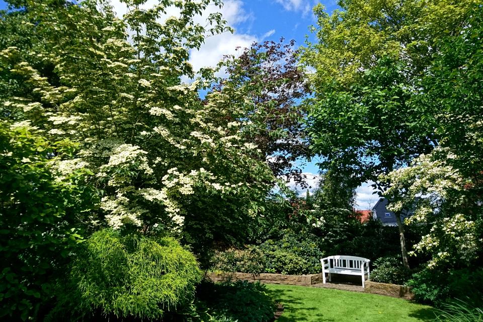 Дерен коуза (Cornus kousa) в углу сада Кирстен и Ингольф
