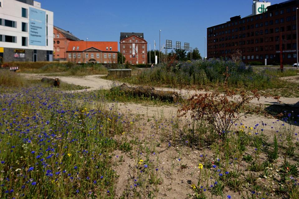 Дикая природа Дании на месте бывшей парковки,г. Рандерс, Дания