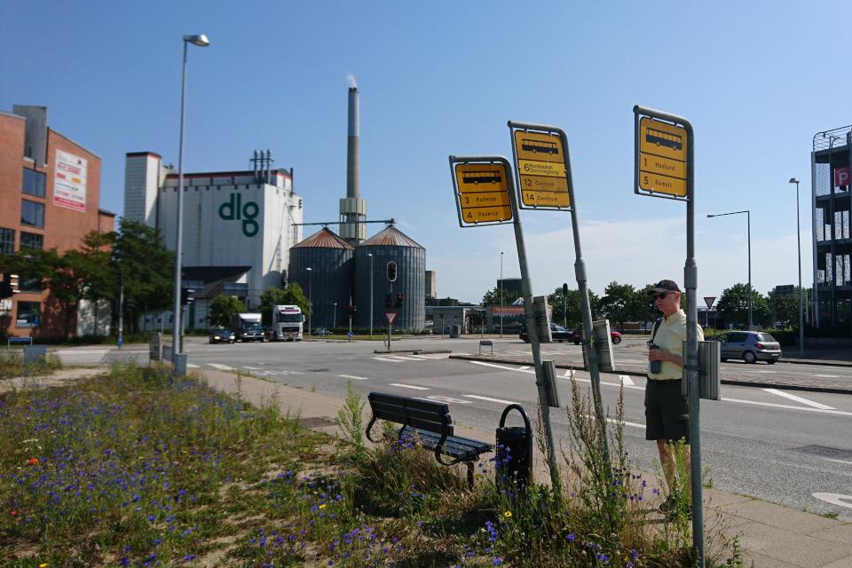 Полынь обыкновенная (лат. Artemisia vulgaris) прорастает в городе, Дания