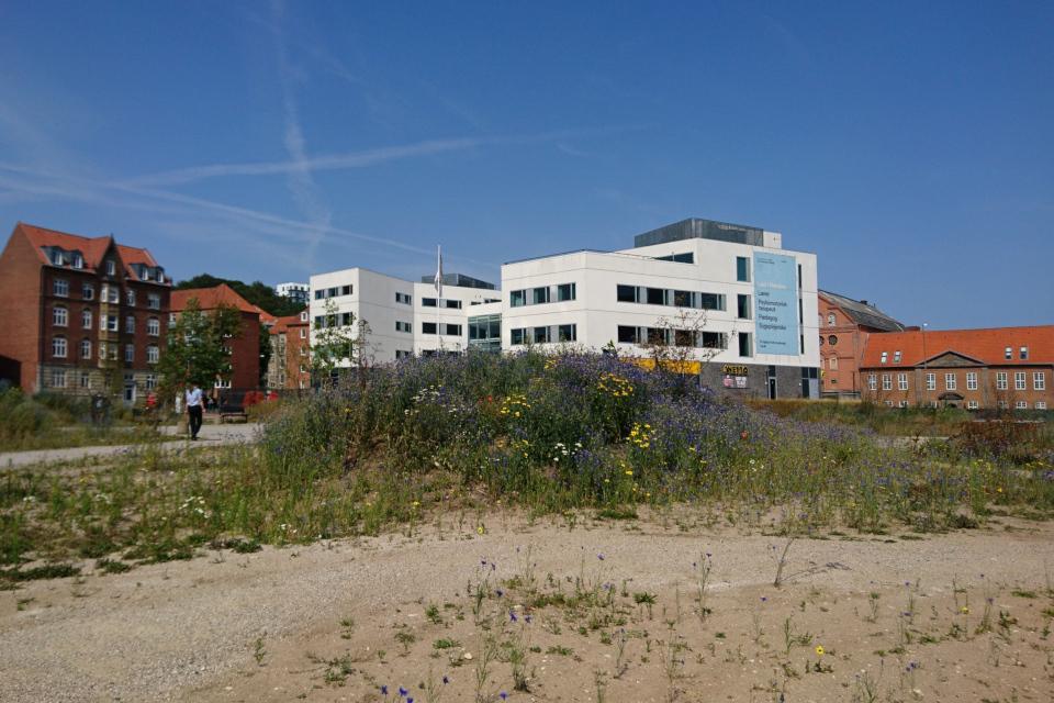 Дикая природа Дании на месте бывшей парковки, Рандерс / Randers, Дания