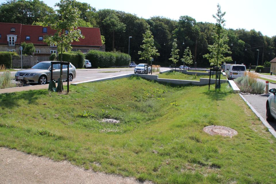 Углубления посреди аллеи для сбора ливневой воды, Risvangs Allé, г. Орхус / Aarhus, Дания