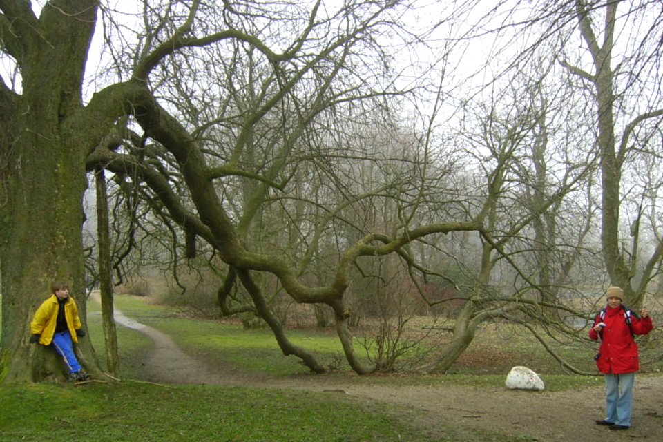 Конский каштан без листьев. Фото 26 мар. 2005, поместье Мосгорд / Moesgaard, Дания