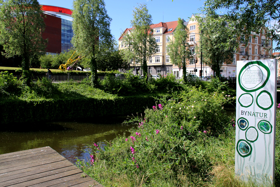 Река Århus Å, поросшая дикими растениями в центре города Орхус