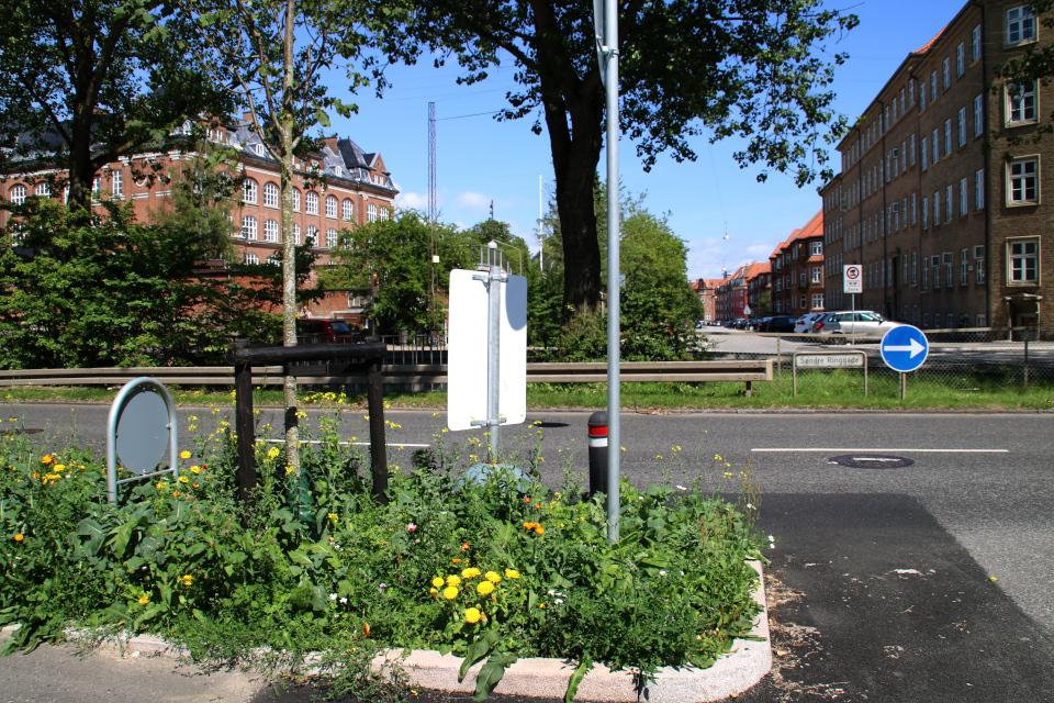 Цветочная клумба с дикими растениями на газоне кольцевой дороги города Орхус