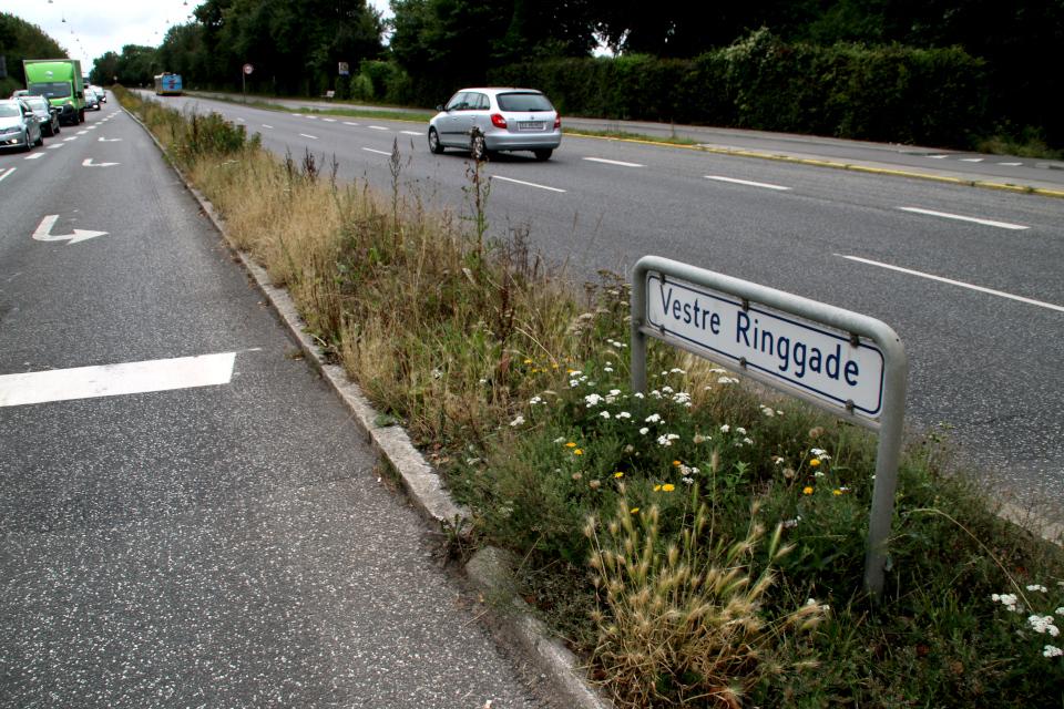 Дикие растения в городах Дании - ястребинка, тысячелистник, пашенный клевер