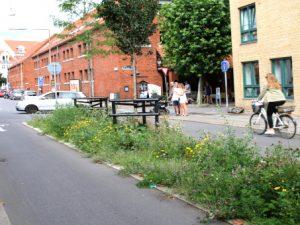 Дикие растения в городах Дании