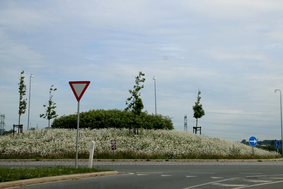 Клумбу посреди кругового движения у въезда на шоссе украшают дикие ромашки