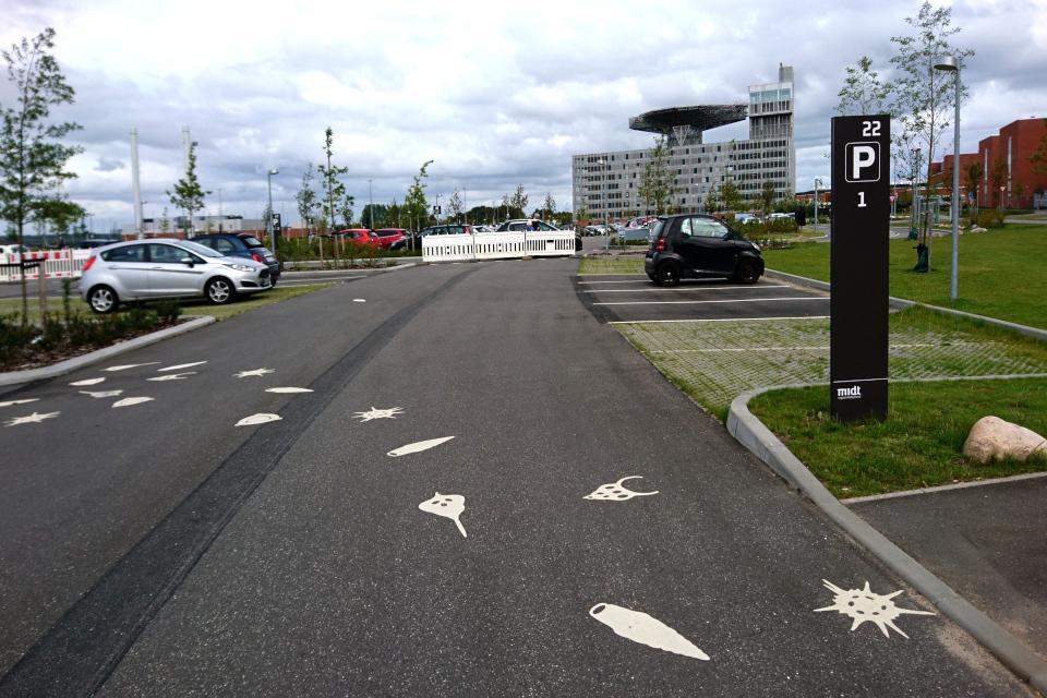 Нарисованные ракушки на парковке показывают направление дорожки
