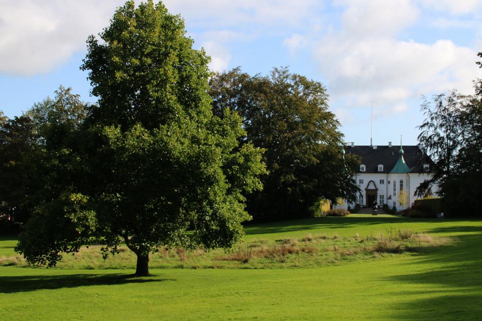 Часть нескошенного газона с дикими растениями в парке перед дворцом Марселисборг