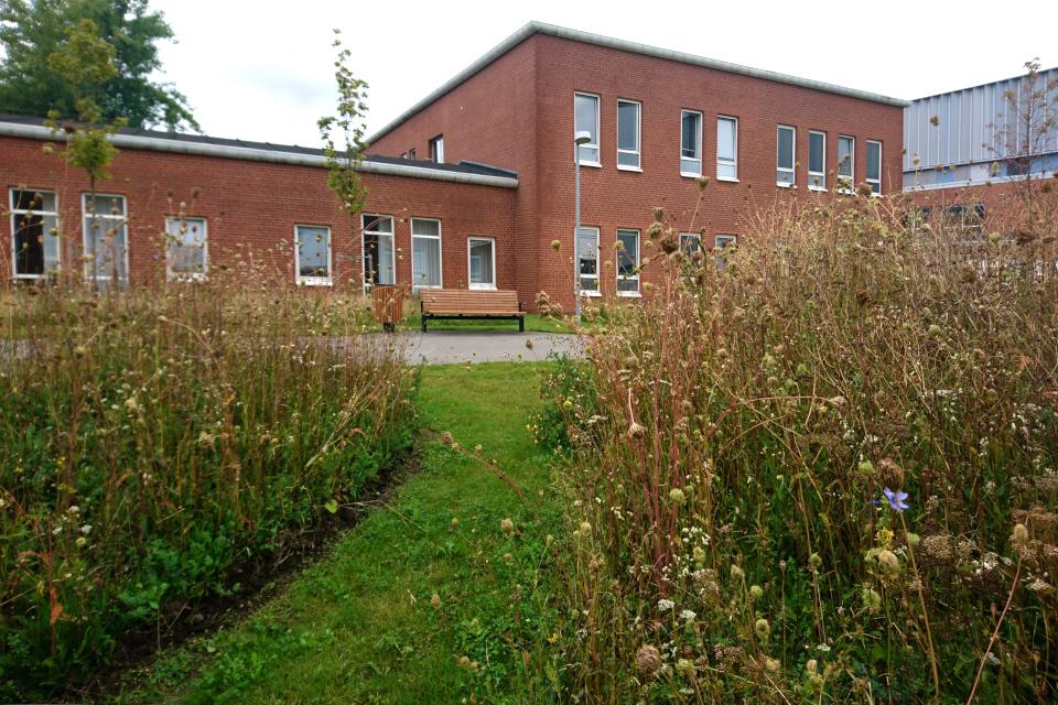 Газон с дикими растениями флоры Дании