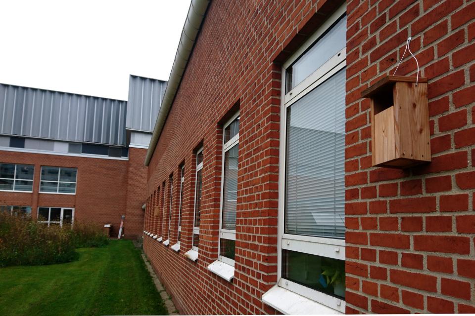 Домики для птиц на стене здания больницы.