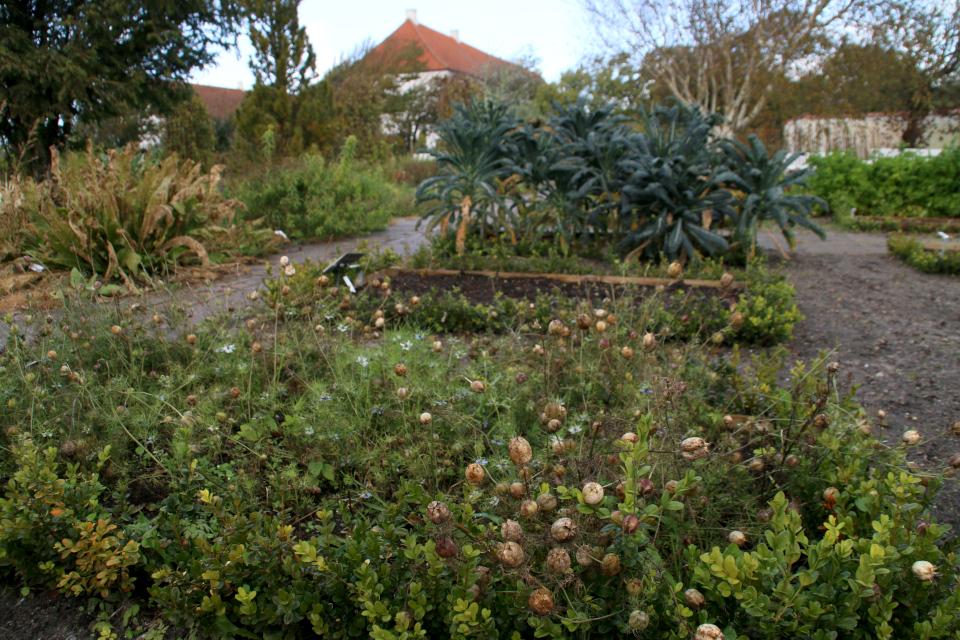 Аптекарский огород монастыря Витскол. Фото 12 окт. 2019, г. Ранум / Ranum, Дания
