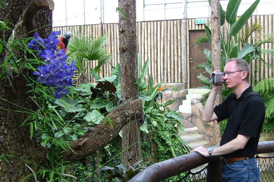 Орхидея Ванда и попугай в тропической оранжереи парка Йесперхус