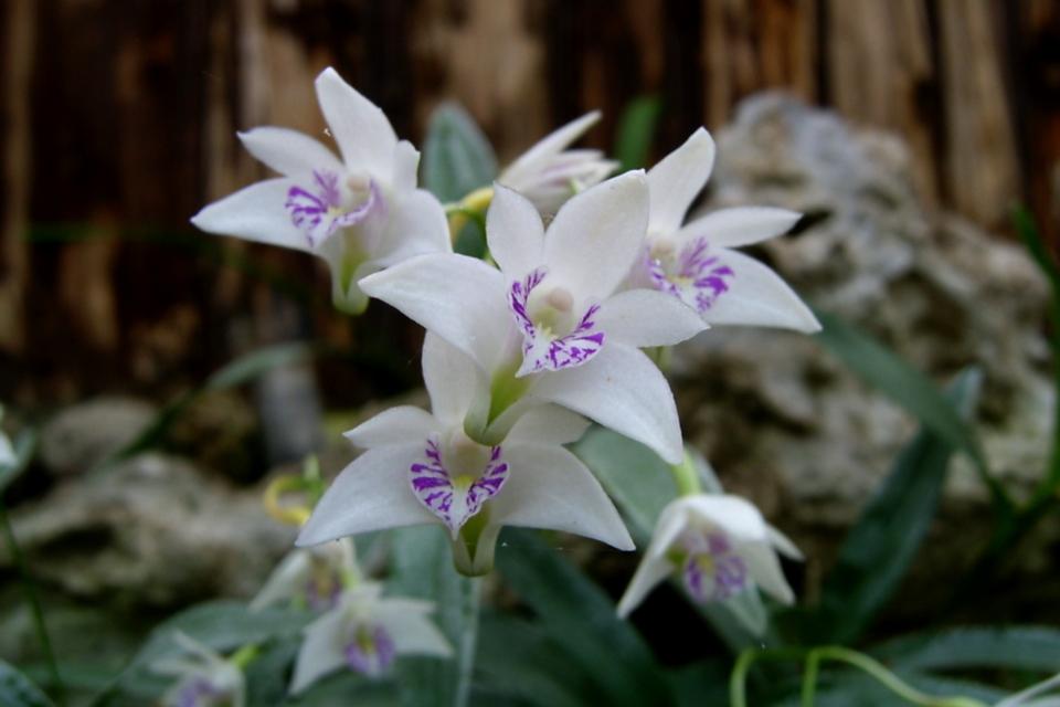 Орхидеи парка Йесперхус (Jesperhus Feriepark