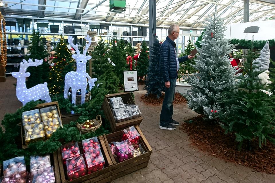 Рождественский базар в Plantorama, северный олень. 22 окт. 2019, Дания