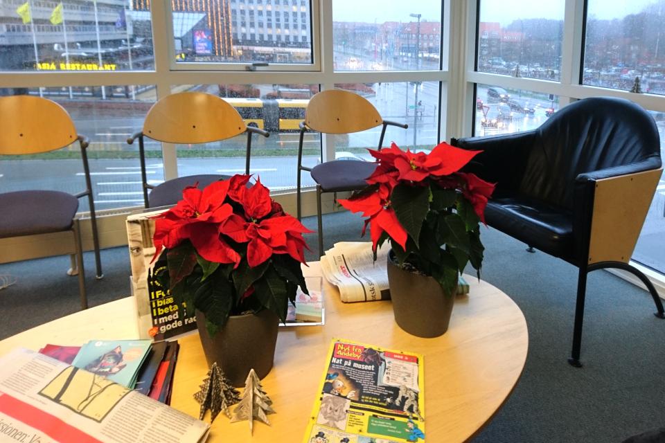 Рождественские звезды в приемной врача. Фото 17 дек. 2019, г. Вибю / Viby, Дания